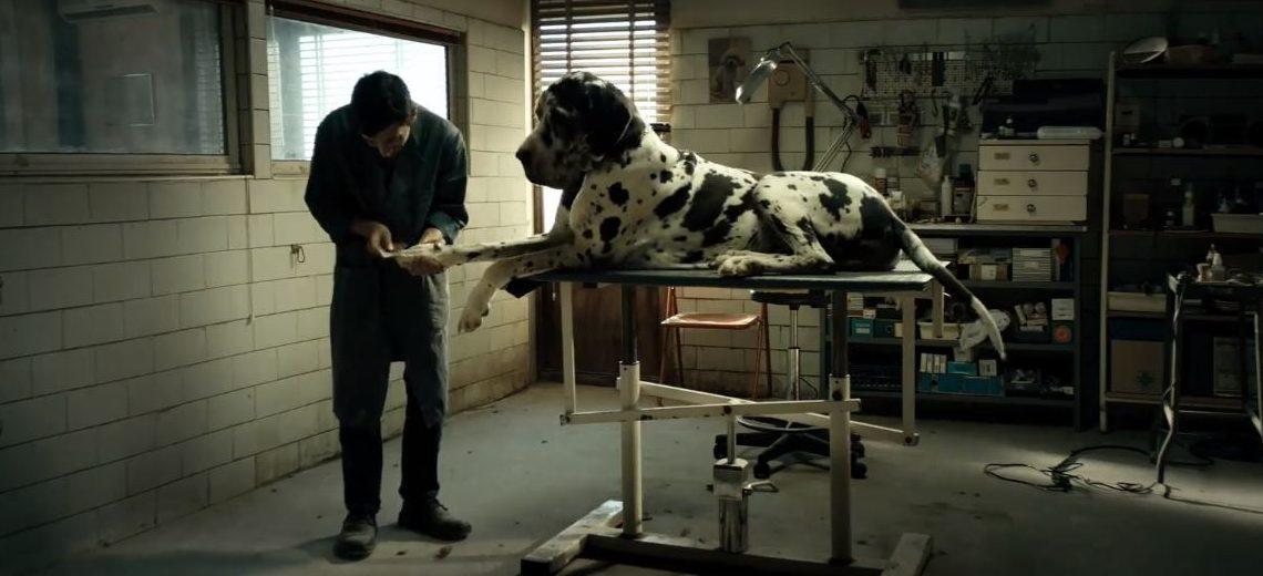 Dogman recenzia: Pre opatrovateľa psov bude najhoršia práca s človekom