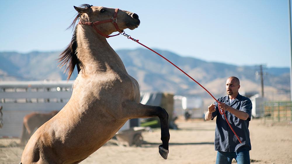 The Mustang recenzia: Krotenie divokých koní väzňami má dojemnú symboliku